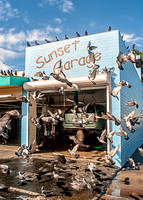 Sunset Garage Pigeons, San Diego, CA